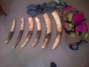 Ivoire 1 éléphants Cotonou